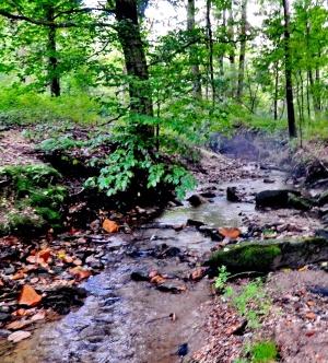 A stream along the Mason Dixon Line in the Fair Hill NRMA.